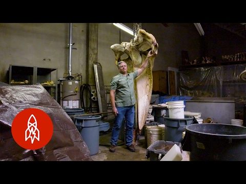 House of Bones: L.A.'s Hidden Whale Warehouse