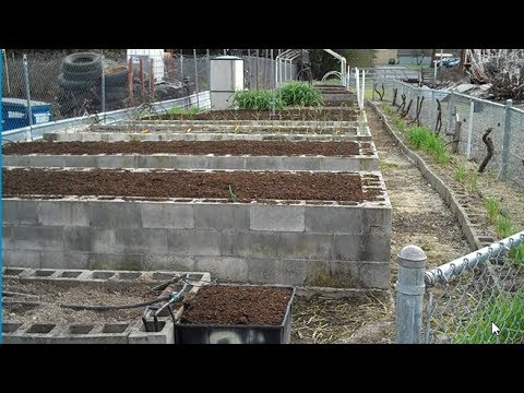 2018 Raised Bed Cinder Block Gardening Perfection