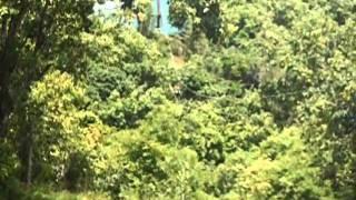 Zipline Kauai, Maui, Hawaii, Extreme Ziplining, FATAL CRASH