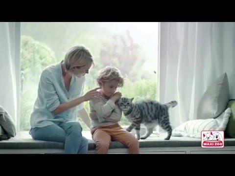Vidéo Billboard MAXI ZOO - D8 Les animaux de la 8