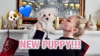 MEET MY NEW PUPPY! VLOGMAS 2020