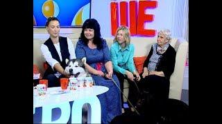 Член клуба «Защита животных» Ангелина Бондарчук: содержать и воспитывать можно любую породу собак