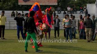 Camel dances to dhol beats : Only in India