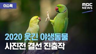 [이슈톡] 2020 웃긴 야생동물 사진전 결선 진출작 (2020.09.16/뉴스투데이/MBC)