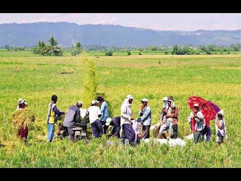 p1.5-b-loan-fund-for-rice-farmers-set