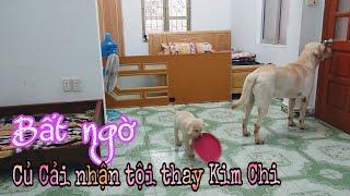 Camera giấu kín |chó Kim Chi Củ Cải làm gì khi chủ đi vắng |What will my dog do when I leave my room