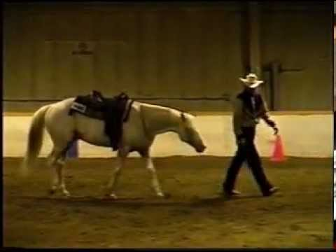 YOR High Noon Bridle-less Reining Appaloosa Stallion