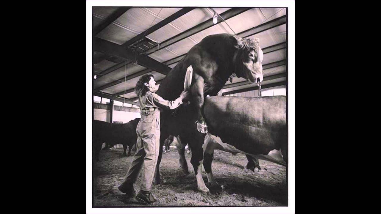 La branleuse de taureau - Chanson paillarde