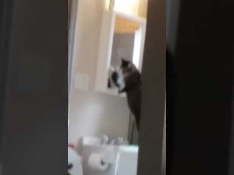 My cat likes the mirror