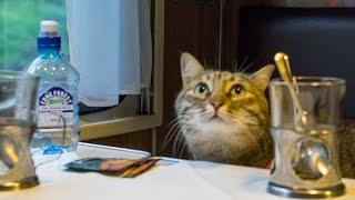 В каких поездах РЖД можно перевозить кошку (2015, лето)