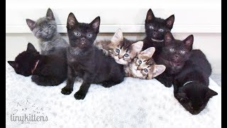 LIVE:_Kittens_with_Sister_Moms_Angela_and_Shirley!__TinyKittens.com