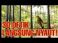 Masteran Kolibri Kelapa Korlap Wiceh Wiceh Gacor  Mp3 - Mp4 Download