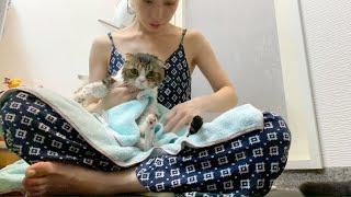 苦手なお風呂をママと頑張ったパパ猫