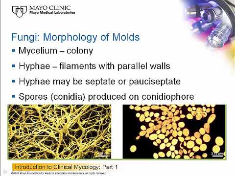 Download Introduction to Clinical Mycology: Part 1 [Hot Topic]