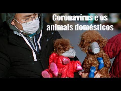 Coronavírus E Os Animais Domésticos - Veterinária Responde