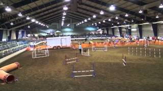 Jinn Akc Open Jumpers With Weaves