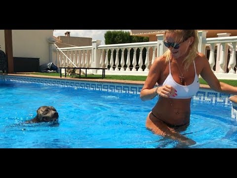 OH MY GOD! WOMAN CHASED BY A SWIMMING PIT BULL!