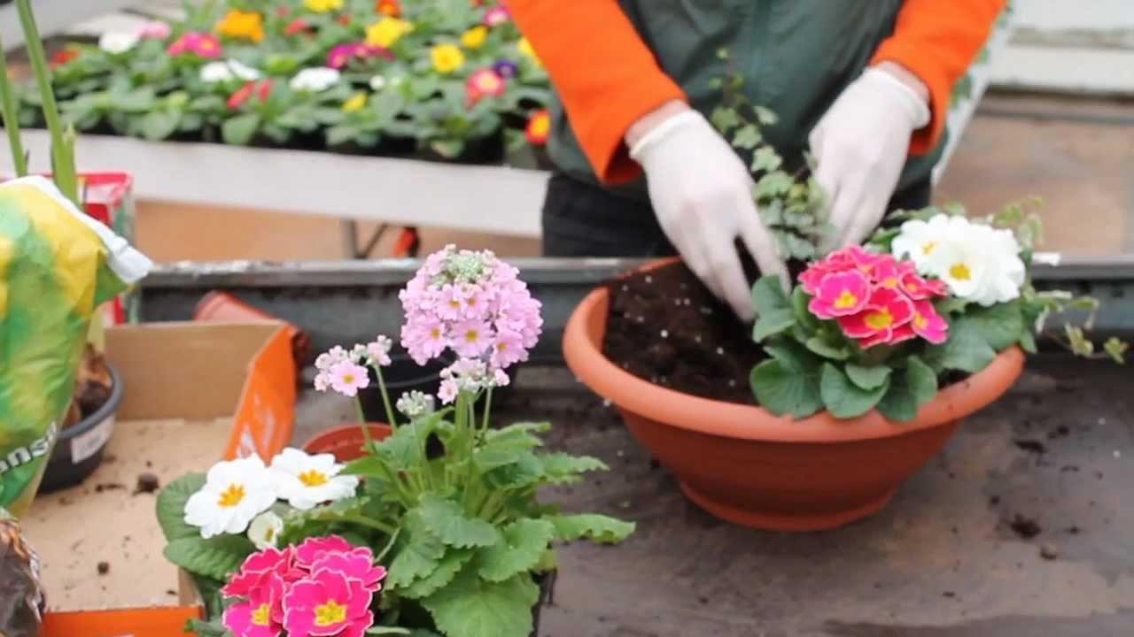 Creare una composizione con fiori e piante primaverili youtube - Piante vaso da esterno con fiori ...