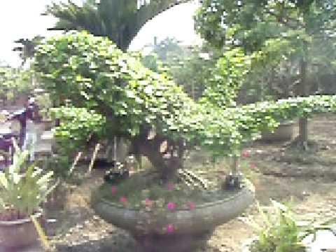 cau lac bo hàng đẹp sieu thi cây cảnh Bonsai Việt namtong hop nghe thuat bonsai