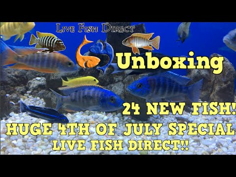 Live fish direct unboxing 24 fish huge 4th of july for Live fish direct