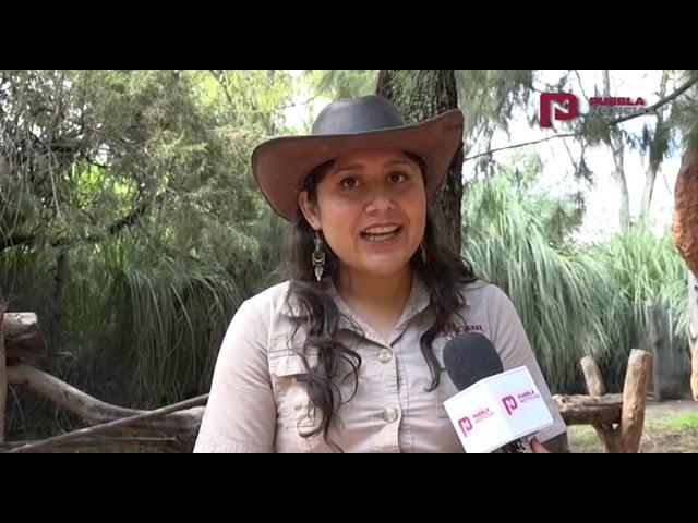 #PueblaNoticias Conoce al marsupial más grande del mundo