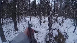 Охота на лося с подхода или цена видео,или как просрать лося)