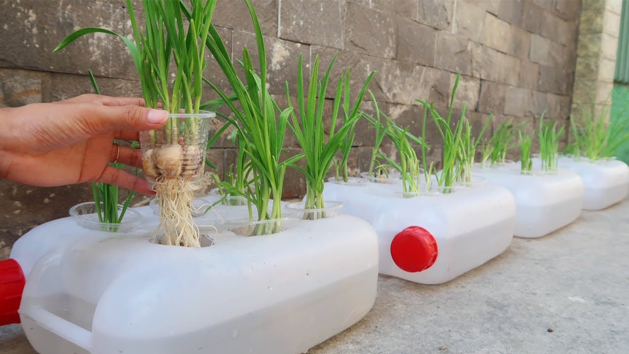 Unique Idea | How to grow Garlic in Plastic Cans easily for beginners