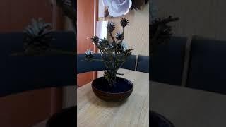 Творчий урок початківця Віки, дерево роду із шишок