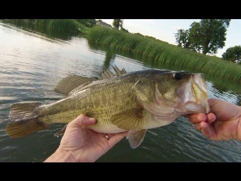 Mid-Summer MN Bass Fishing w/Bonus Panfish Action 7/18/16