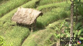 峇里島 稻田 小屋 Small shed in rice terrace in Bali, Indonesia hm2630000166