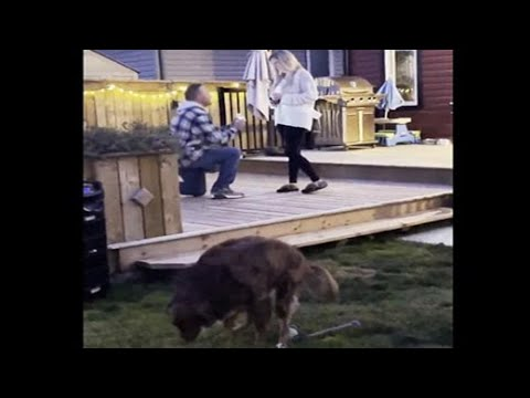 Dog Hilariously Ruins Marriage Proposal Video