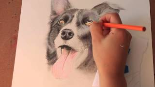Speed Drawing: Dog Border Collie (Smooth Coated)