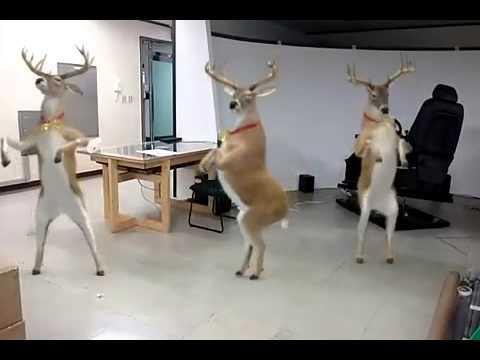 Renos bailando al ritmo de la Navidad/ animales graciosos bailando