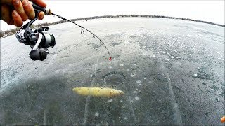 Caught a RARE Silver Pike Ice Fishing Thin Ice