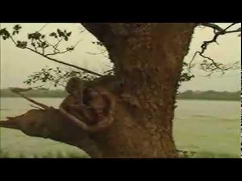 Download Ape Urumaya (Our Heritage) - Part  3 of 5