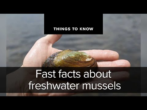 Fast Facts About Freshwater Mussels | Things To Know