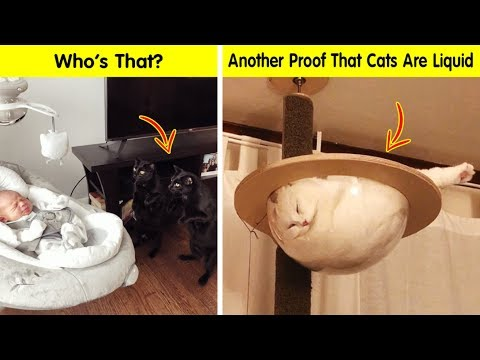 Cats Cracked Us Up - Funny cat pics