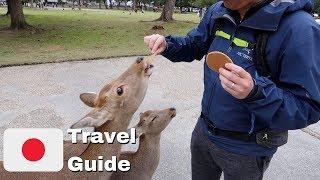 Feeding the Sacred Deer in Nara, Japan   Japan Travel Guide