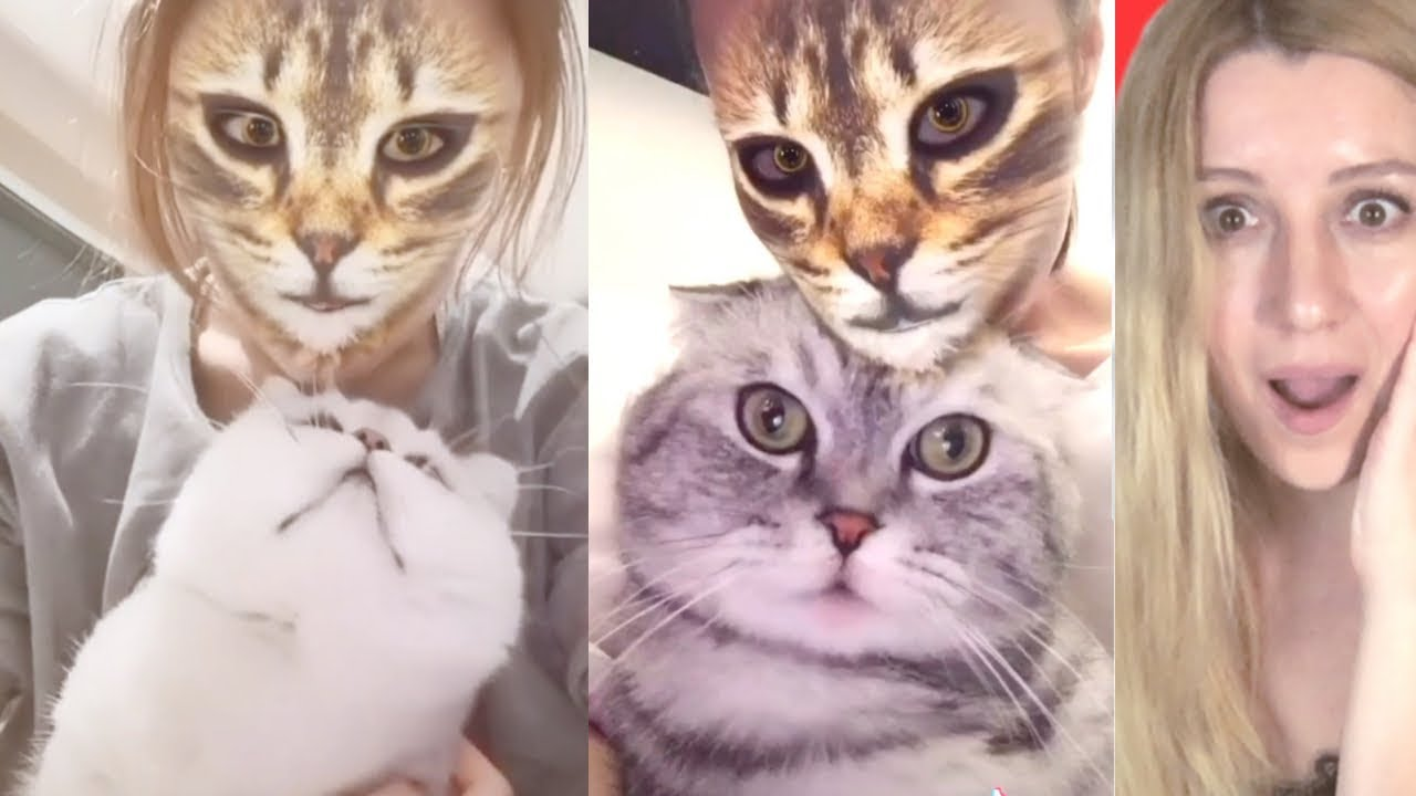 Cats Reaction When They See Cat Filter On Owners Faces ! Funny Cat Video!