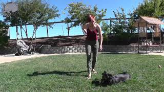 Puppy training: how to teach a puppy to lay down - session 3