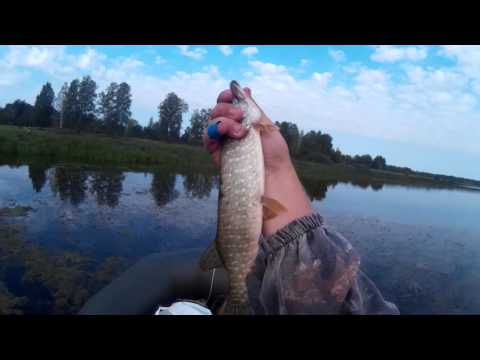 омская рыбалка форум оша