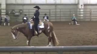 Ellie Becker Horsemanship video 1