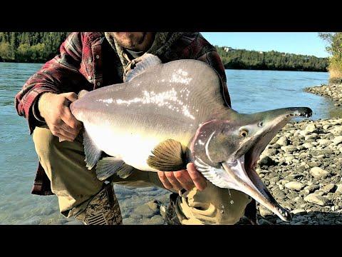 Fishing Alaska, Kenai Peninsula