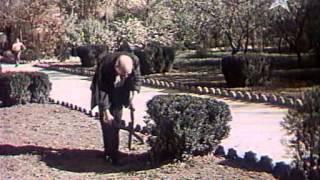 Слепая птица 1963
