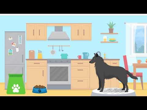 Doggle Guides - Groenendael Belgian Shepherd - Dog Breed Info