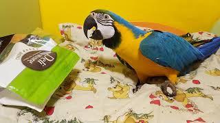 Попугай ара и пакет из-под корма
