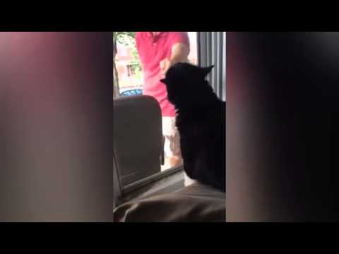 Cat is extremely jealous of owners new...
