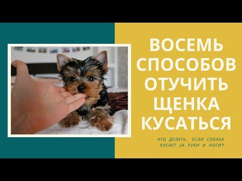 Вопрос: Как отучить щенка кусаться?