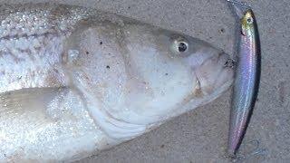 Striped Bass Lures - Daiwa Salt Pro Minnow (floater)