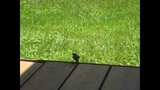 Mad House Wren (part 2 Of 2)